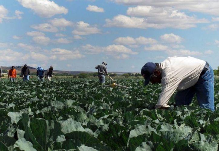 Migrantes en California han aprendido inglés con base en el proyecto desarrollado por el yucateco Said Farah Ceh. (Agencias)