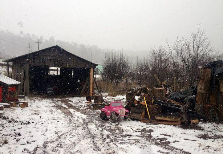 Los municipios de Guanaceví, Tepehuanes y Otáez, en Durango, registran nevadas a causa de la quinta tormenta invernal.  (Foto: Notimex)