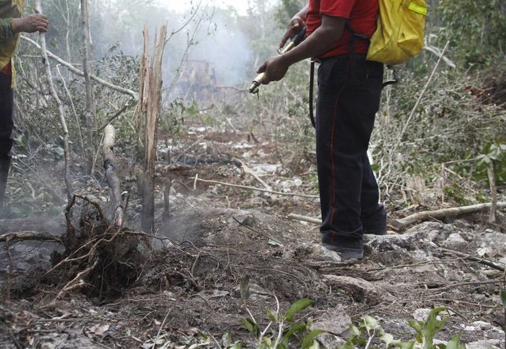 Continúan las arduas labores de combate de incendios en Benito Juárez. (Victoria González/SIPSE)