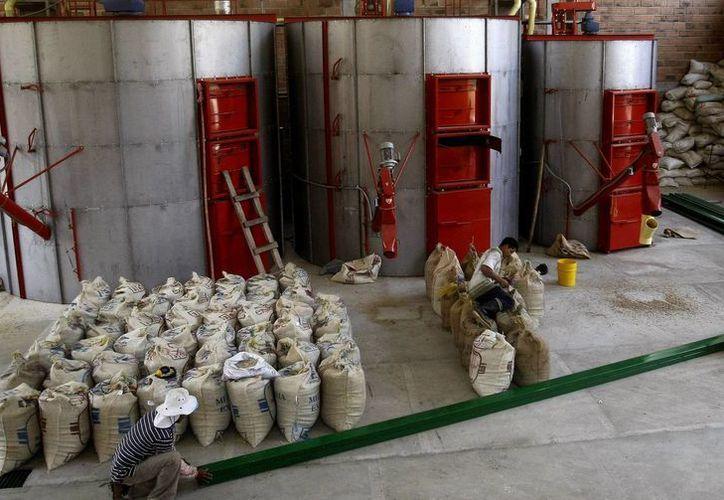 Fotografía de operarios de la empresa Sanadores Ambientales trabajando en su planta ubicada en la población de Salgar, Antioquia. (EFE)