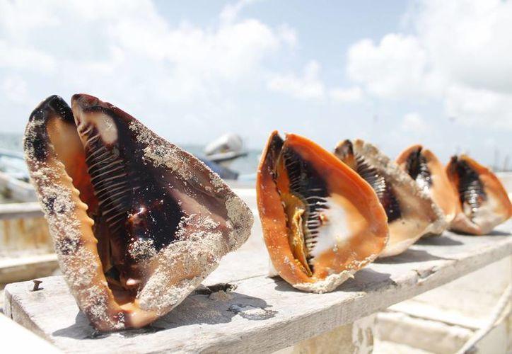 Pescadores consideran que la depredación de especies continuará mientras no se haga respetar la ley. (Jesús Tijerina/SIPSE)