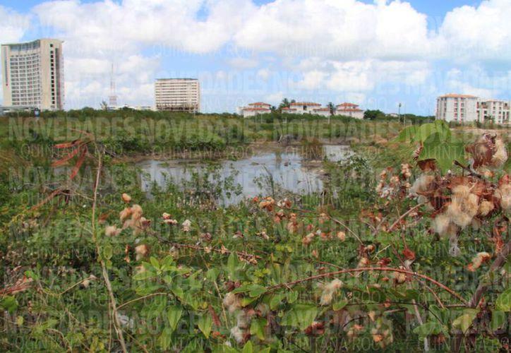 Causaron daños ambientales para desarrollar el proyecto en Malecón Tajamar. (Redacción)