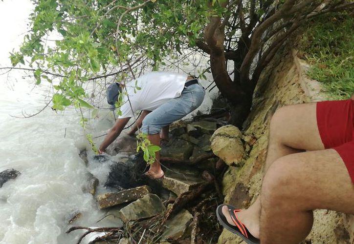 El año pasado, recalaron alrededor de cinco mamíferos acuáticos muertos. (Benjamín Pat/ SIPSE)