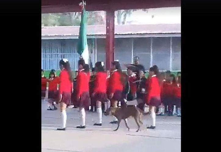 En la grabación se puede ver el momento en el que cinco niñas, integrantes de la escolta de una primaria participan en la ceremonia de honores a la Bandera. (Foto: Captura de pantalla).