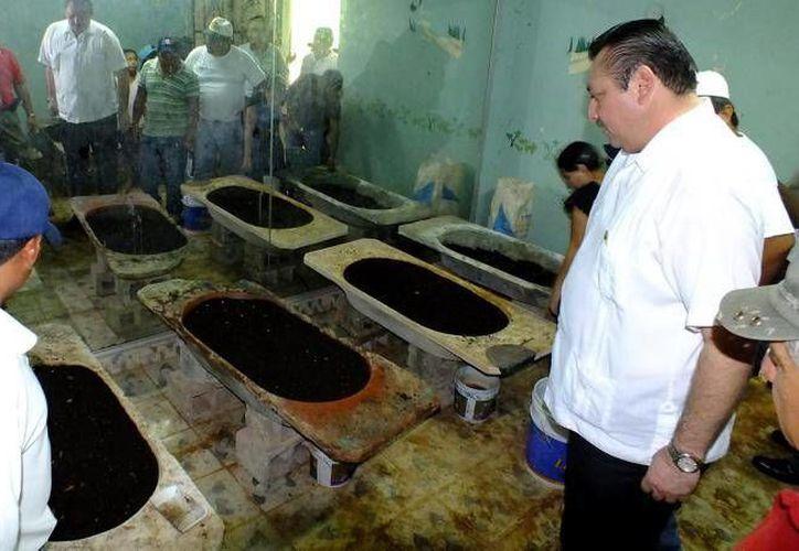 En Yucatán en varios lugares se fomenta el cultivo de plantas medicinales. La imagen corresponde a una visita del alcalde Roger Alcocer García a un centro botánico. (valladolid.gob.mx)