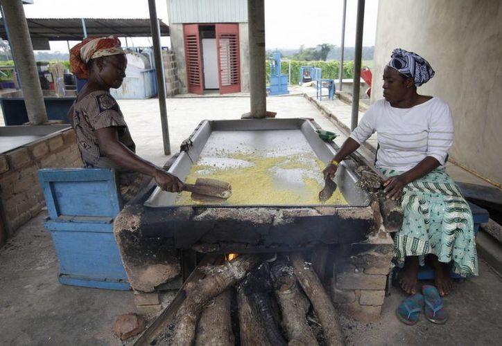 Mujeres convierten la planta de cassava en harina garri en el Instituto Internacional para la Agricultura Tropical en Ibadán, Nigeria. (Agencias)