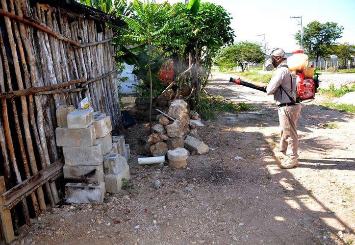 Será en próximas fechas cuando se realice otro operativo; sin embargo, varias familias son afectadas por mosquitos. (Joel Zamora/SIPSE)