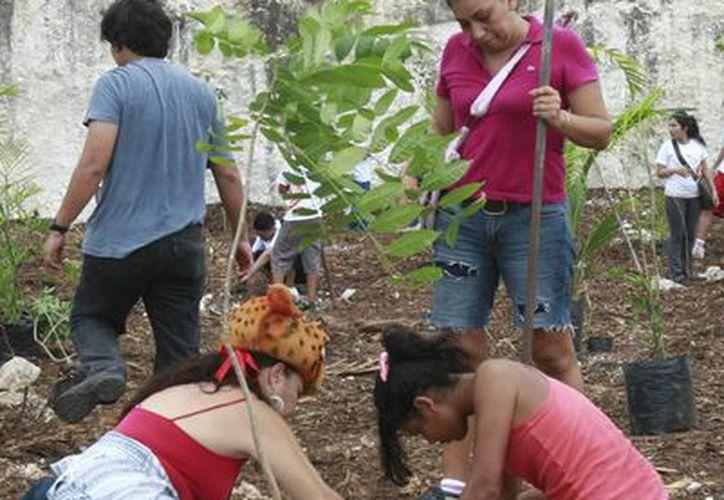 La Conafor ha logrado elevar la supervivencia de los árboles plantados hasta 70%. (Tomás Álvarez/SIPSE)