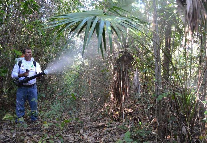 Desde el año 2012, la dependencia federal realiza trabajos de monitoreo sobre la plaga.  (Edgardo Rodríguez/SIPSE)