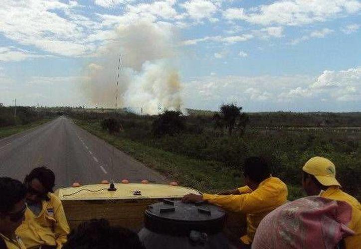 Trabajan 103 brigadistas en los diferentes incendios registrados. (Cortesía/SIPSE)