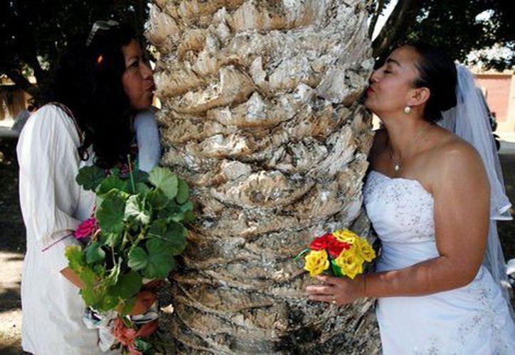 """""""Cásate con un árbol"""" es una iniciativa para amar, cuidar y respetar a las especies. (Foto: Milenio.com)"""