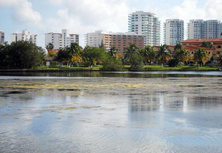 Invitan a la población a que se sume a la protección de los manglares. (Tomás Álvarez/SIPSE)