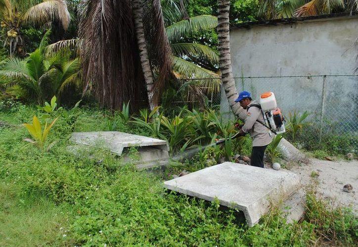Se realizaron acciones de control larvario en áreas verdes cercanas a edificios habitados. (Redacción/SIPSE)