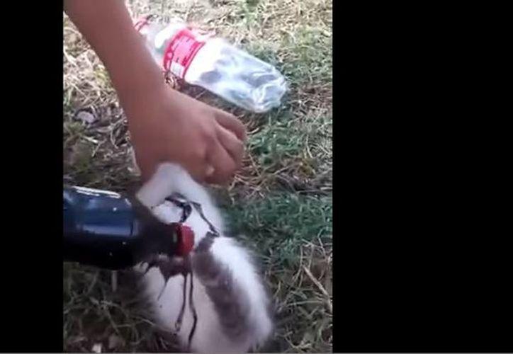 Captura de video donde se ve cómo la mujer captura al gatito y le prende fuego. (YouTube)