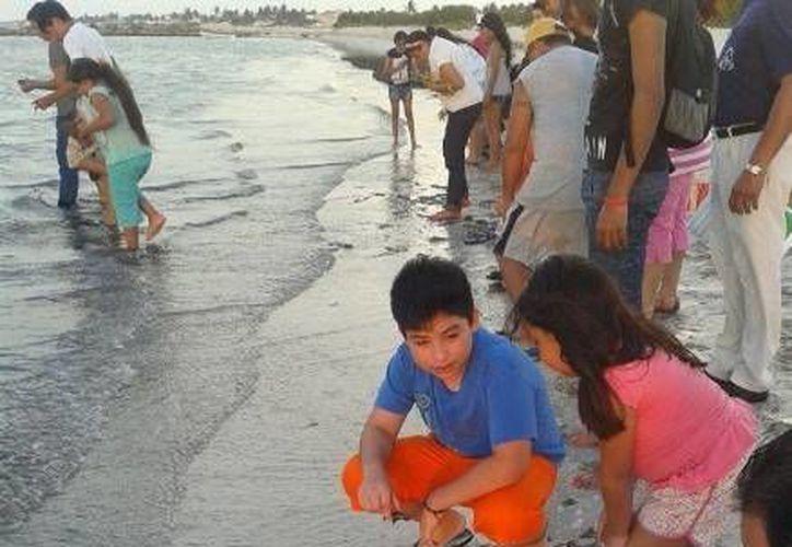 Los niños fueron los más entusiasmados con la liberación de las tortuguitas de carey. (Óscar Pérez/SIPSE)