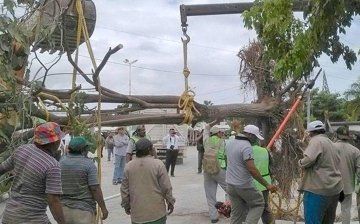 Colocan el primero de ocho árboles en el centro de esparcimiento. (Jesús Tijerina/SIPSE)