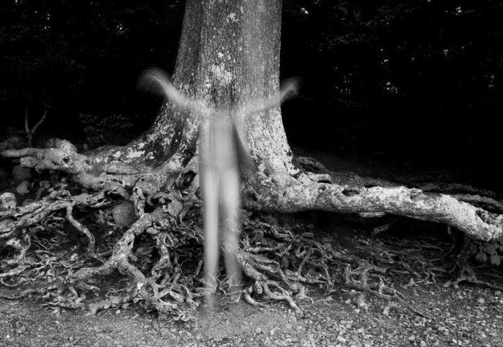 """Dicen en Temozón Sur que si estás en la noche junto a un árbol, te espantará """"el aparecido"""". (Agencias)"""