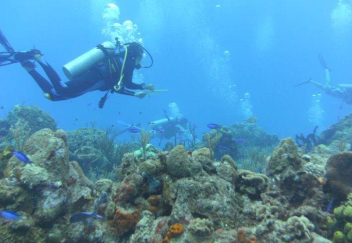 Monitorean el arrecife para evitar la contaminación. (Redacción/SIPSE)
