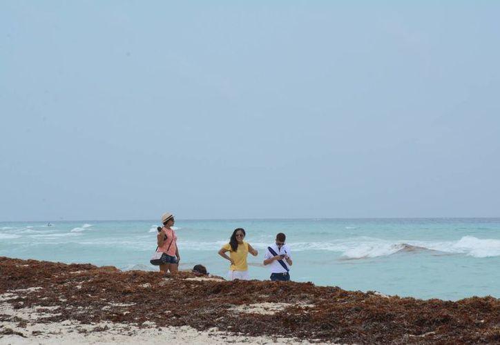 Los turistas desconocen que la presencia del sargazo sea un fenómeno natural. (Tomás Álvarez/SIPSE)