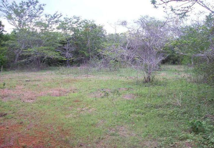 Si uno no supiera la historia, jamás pensaría que este terreno llano fue un cementerio llamado 'Santa María' en Sacalum. (Jorge Moreno/SIPSE)