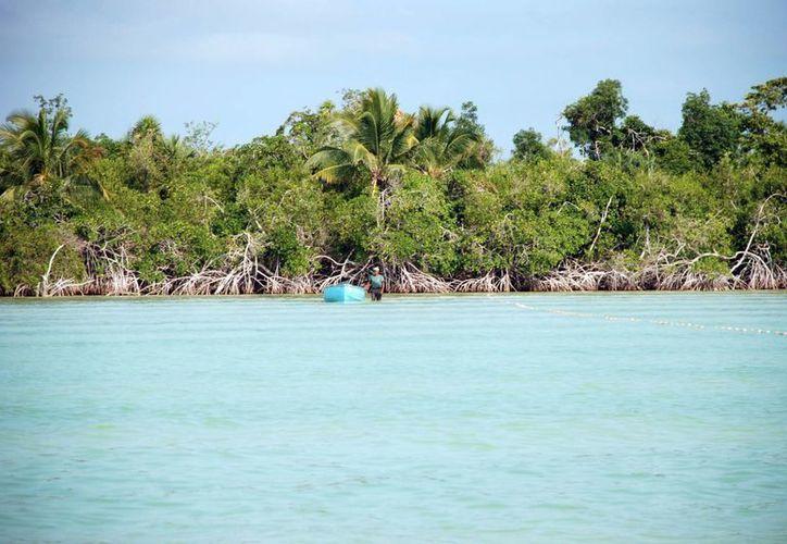 Unos 200 kilómetros de litoral, está totalmente desprotegido. (Cortesía/SIPSE)