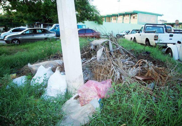 Muchas escuelas colindan con terrenos baldíos y los profesores reclaman la pasividad de las autoridades sanitarias ante los constantes casos de chikungunya. (Milenio Novedades)