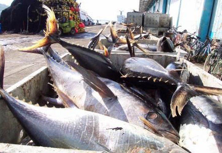 México se quejó ante el organismo mundial sobre normas de etiquetado de atún de Estados Unidos. (El Financiero)