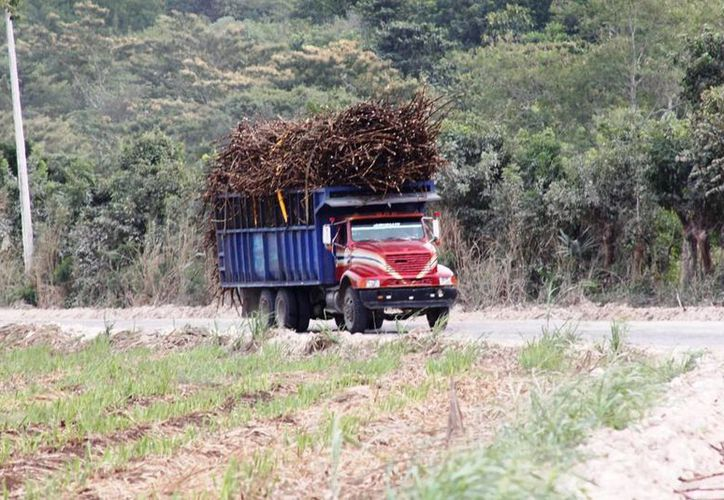 Hasta el momento se reportaban un millón 429 mil toneladas de caña. (Edgardo Rodríguez/SIPSE)