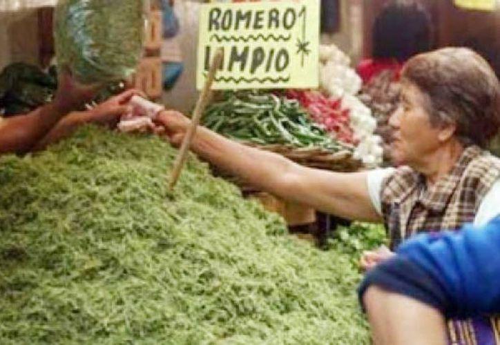 Los romeritos son preparados tradicionalmente con mole y en torta de camarón o revoltijo. Imagen de un puesto de mercado donde se vende esta planta. (esmas.com)