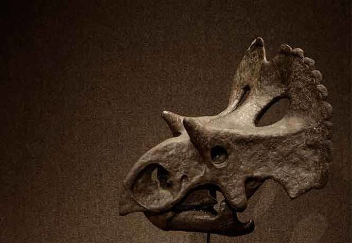 El dinosaurio data de hace 73 millones de años. (Excelsior)