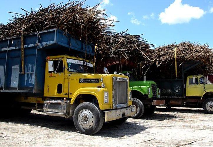 Con esta ventaja se podrá producir mayor volumen de azúcar y sin saturar el mercado que les desplome el precio. (Foto: Juan Rodríguez/SIPSE)
