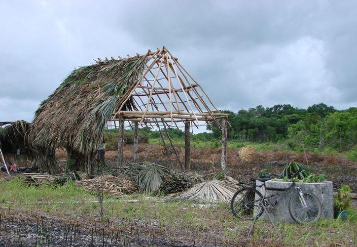Los saqueadores usan la madera para comercializarla. (Manuel Salazar/SIPSE)