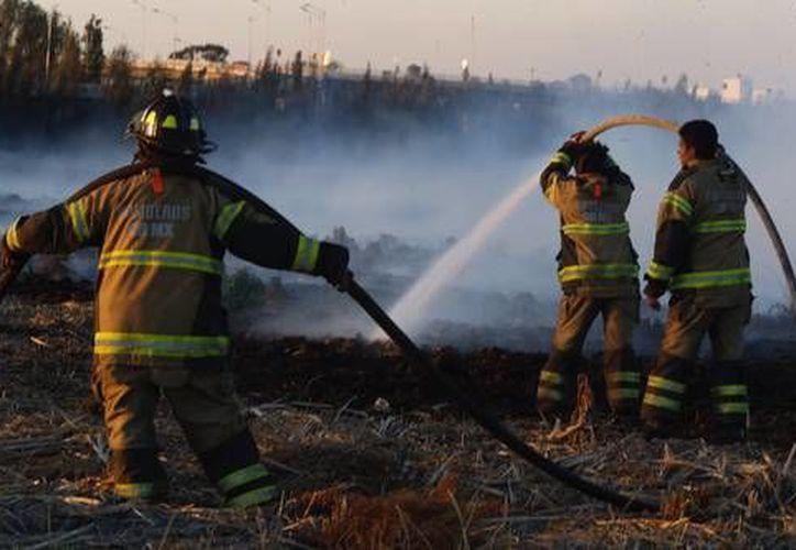 Se trató del cuarto incendio ocurrido en las áreas verdes de la Ciudad de México. (La Jornada)