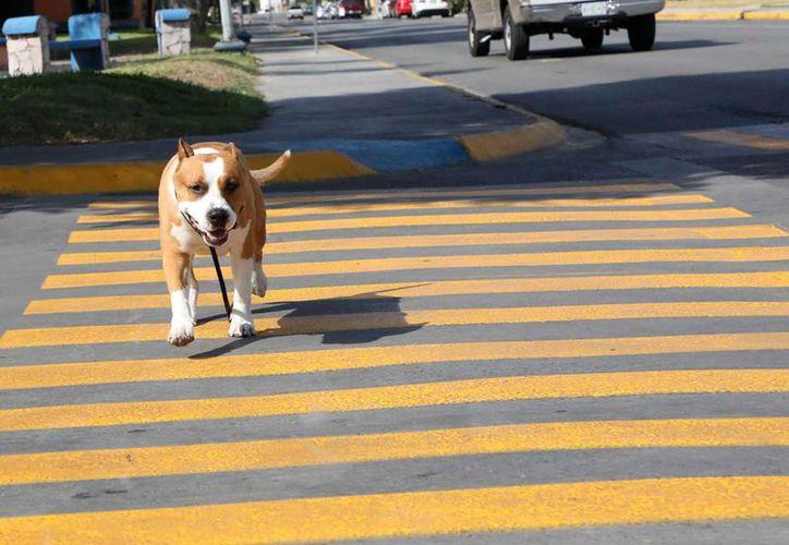 Se busca proteger especialmente a los perritos y gatitos de la calle. (Twitter @gobnicolas)