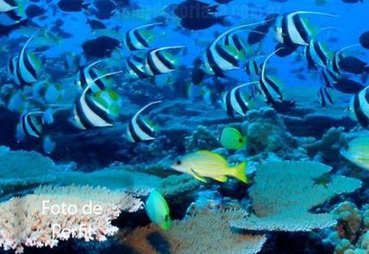 El Día Mundial de los Océanos se conmemora el día de hoy en el planeta. (Foto/Internet)