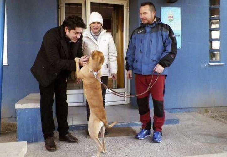 El alcalde de Alcorcón, David Pérez (izq), entrega a Teresa Romero y su marido, Javier Limón, a su nuevo perro adoptado, 'Alma'. / EFE