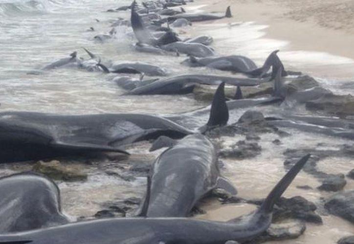 Los expertos aún desconocen qué causó que las ballenas quedaran varadas. (BBC Mundo)