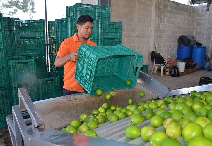 Será punto estratégico para concentrar toda la producción de Othón P. Blanco, Bacalar, José María Morelos y el mismo Felipe Carrillo Puerto y colocarlo en la zona turística de Cancún y Riviera Maya.