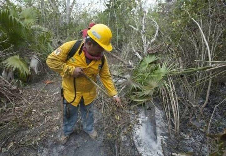 """El incendio """"El Cocoyol"""" en Bacalar, había afectado 320 hectáreas y en su combate y extinción participaban 52 brigadistas. (Harold Alcocer/SIPSE)"""