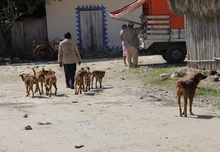 Los habitantes de Tulum piden que los perros callejeros sean resguardados.  (Rossy López/SIPSE)