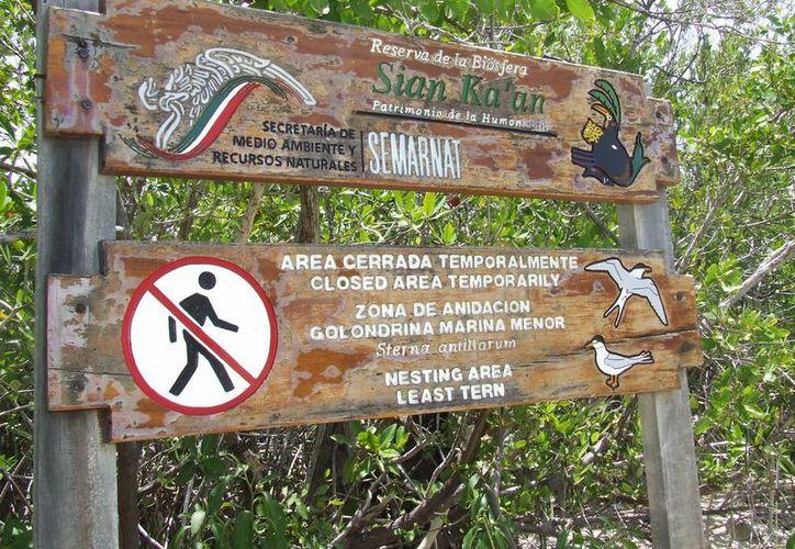 Las personas que eligen este recorrido pueden apreciar cinco destinos turísticos. (Tomás Álvarez/SIPSE)