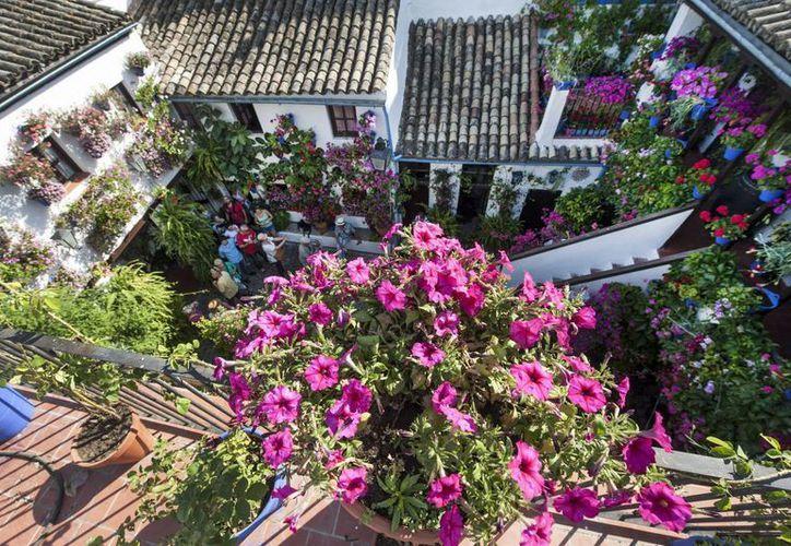 Vista de uno de los patios del barrio de San Basilio de la ciudad cordobesa, que se engalana de claveles y gitanillas para celebrar el tradicional Festival de los Patios de Córdoba. (EFE)