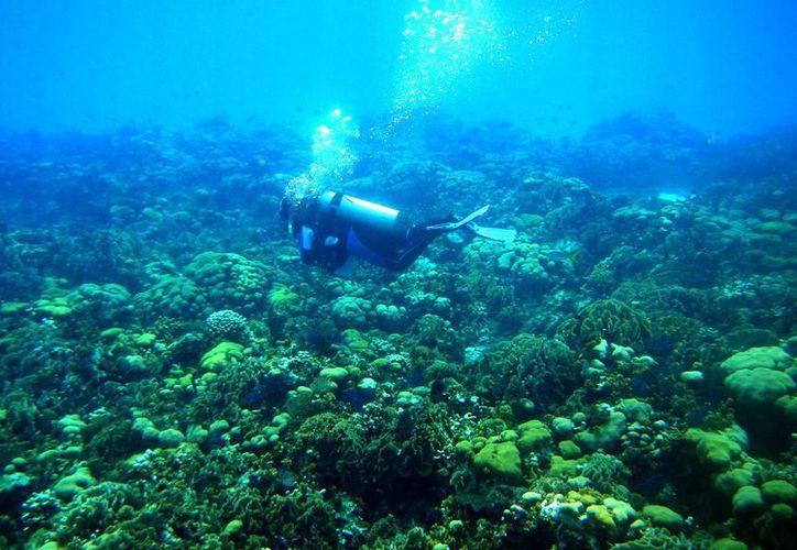 Las actividades humanas dañan a la biodiversidad marina. (Raúl Caballero/SIPSE)