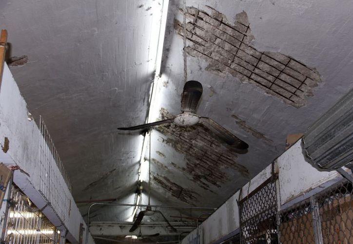 Los techos de la ex área de carne están en mal estado. (Milenio Novedades)