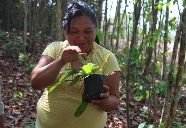 Se ha realizado la identificación de especies y preparación del terreno donde se establecerá el Jardín Medicinal Ts'aak Xi. (Ángel Castilla/SIPSE)