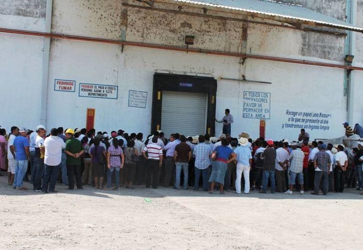 Los productores de caña, están inconformes con el retraso en la entrega de los apoyos. (Manuel Salazar/SIPSE)