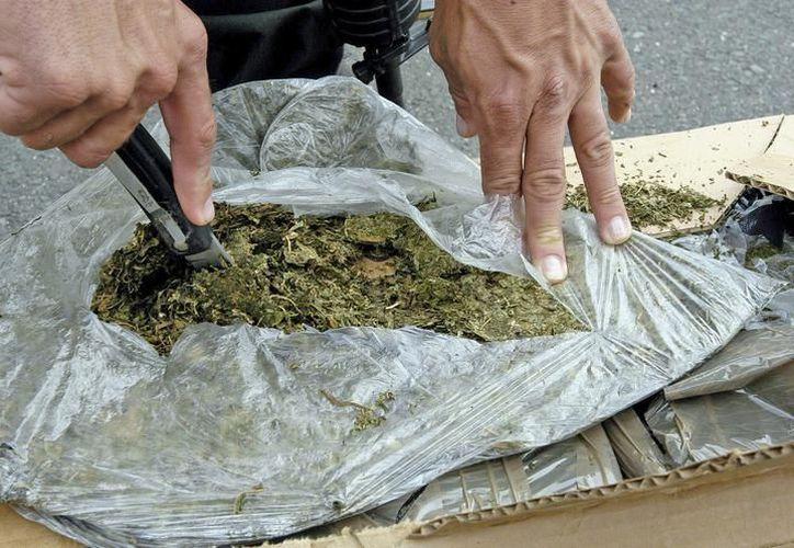 En el cateo se localizaron 529 gramos 900 miligramos de marihuana, una báscula gramera y bolsas tipo ziploc. (SIPSE)