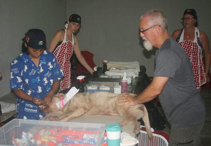 Tanto en Tulum como en Cozumel, se apuesta por la esterilización de perros callejeros para evitar que se multipliquen.  (Irving Canul/SIPSE)