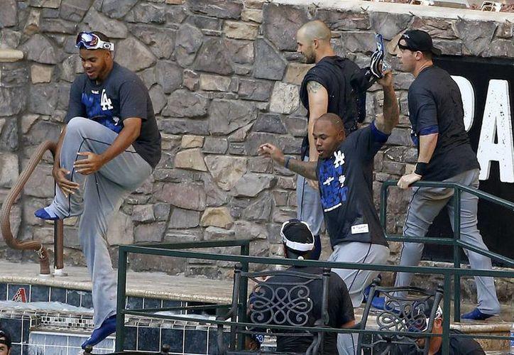 Los Dodgers celebran la derrota de los Diamondbacks de Arizona, saltando a la piscina del  Chase Field. (Agencias)