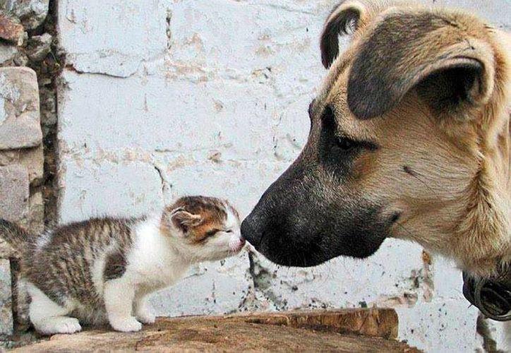 Se incrementa el abandono de mascotas, pero las donaciones no. Esto ha colocado a las asociaciones protectoras de animales en una crisis y al borde de la extinción. La imagen es con fines ilustrativos. (Milenio Novedades)